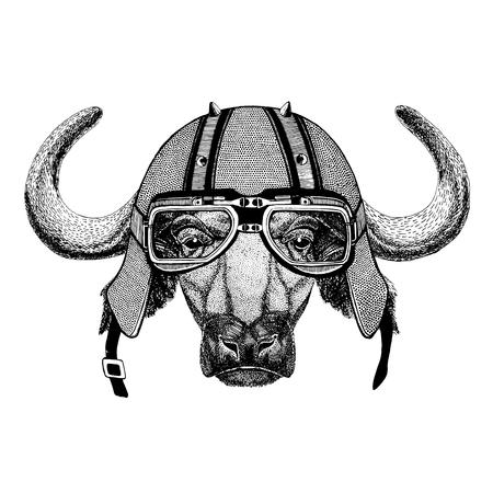 Buffalo, bull, ox wearing biker helmet Animal with motorcycle leather helmet Vintage helmet for bikers Aviator helmet Stock Photo