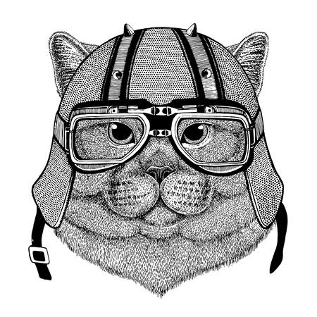 Brithish noble cat Male wearing biker helmet Animal with motorcycle leather helmet Vintage helmet for bikers Aviator helmet Фото со стока
