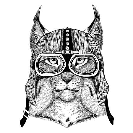 Gatto selvatico Lynx Bobcat Trot Motocicletta, motociclista, aviatore, mazza da mosca Illustrazione per tatuaggio, t-shirt, emblema, distintivo, cerotto Archivio Fotografico - 82164608