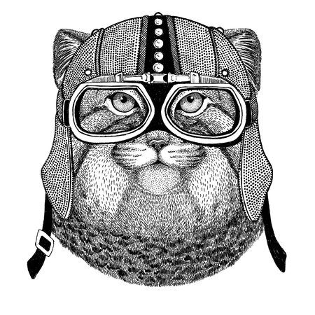 mustached: Wild cat Manul Motorcycle, biker, aviator, fly club Illustration for tattoo, t-shirt, emblem, badge, logo, patch