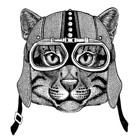 Wild cat Fishing cat Motorcycle, biker, aviator, fly club Illustration for tattoo, t-shirt, emblem, badge, logo, patch