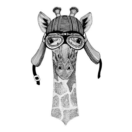 Camelopard, giraffe Wild animal wearing biker motorcycle aviator fly club helmet Illustration for tattoo, emblem, badge, logo, patch