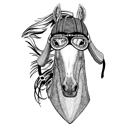 Horse, hoss, knight, steed, courser Wild animal wearing biker motorcycle aviator fly club helmet Illustration for tattoo, emblem, badge, logo, patch Stock Photo