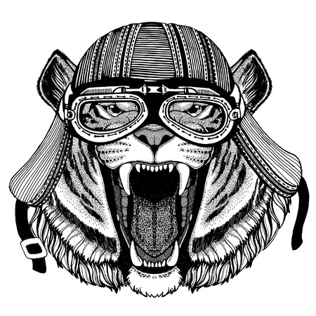 Wild tiger Wild animal wearing biker motorcycle aviator fly club helmet Illustration for tattoo, emblem, badge, logo, patch