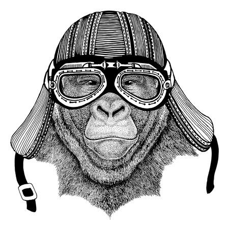 Gorilla, monkey, ape Frightful animal Wild animal wearing biker motorcycle aviator fly club helmet Illustration for tattoo, emblem, badge, logo, patch Stock Photo