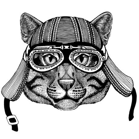 Wild cat Fishing cat Wild animal wearing biker motorcycle aviator fly club helmet Illustration for tattoo, emblem, badge, logo, patch Фото со стока