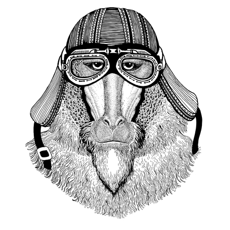 Monkey, baboon, dog-ape, ape Wild animal wearing biker motorcycle aviator fly club helmet Illustration for tattoo, emblem, badge, logo, patch