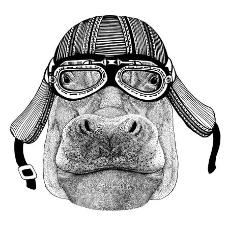 Hippo, Hippopotamus, behemoth, river-horse Wild animal wearing biker motorcycle aviator fly club helmet Illustration for tattoo, emblem, badge, logo, patch