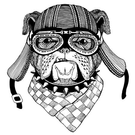 Bulldog Wild animal wearing biker motorcycle aviator fly club helmet Illustration for tattoo, emblem, badge, logo, patch Banque d'images