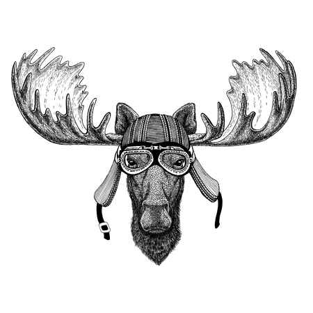 Moose, elk Wild animal wearing biker motorcycle aviator fly club helmet Illustration for tattoo, emblem, badge, logo, patch