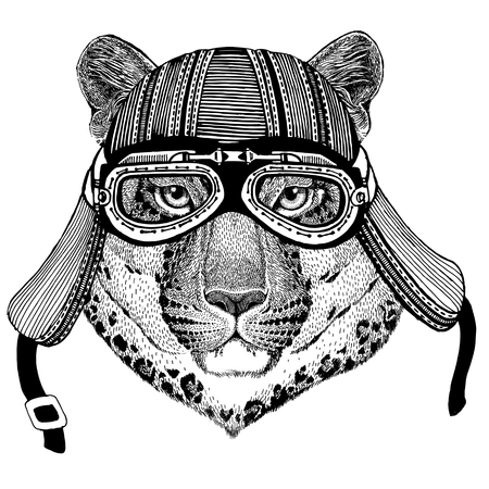 Wild cat Leopard Cat-o-mountain Panther Wild animal wearing biker motorcycle aviator fly club helmet Illustration for tattoo, emblem, badge, logo, patch