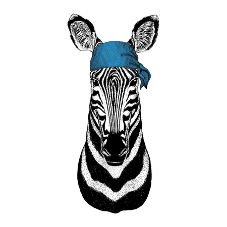Zebra Horse Wild animal wearing bandana or kerchief or bandanna Image for Pirate Seaman Sailor Biker Motorcycle Stok Fotoğraf - 82071624