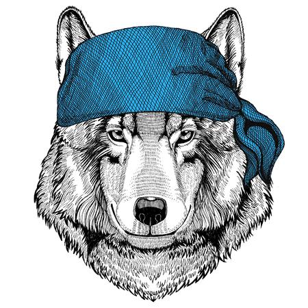 Wolf Dog Wild animal wearing bandana or kerchief or bandanna Image for Pirate Seaman Sailor Biker Motorcycle Stok Fotoğraf