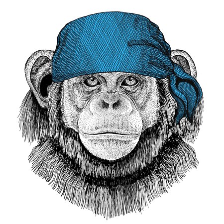 Chimpanzee Monkey Wild animal wearing bandana or kerchief or bandanna Image for Pirate Seaman Sailor Biker Motorcycle