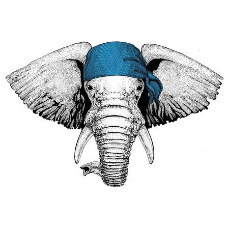 African or indian Elephant Wild animal wearing bandana or kerchief or bandanna Image for Pirate Seaman Sailor Biker Motorcycle Stok Fotoğraf
