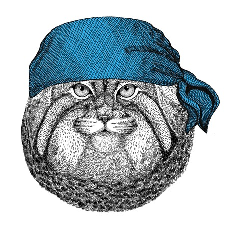 Wild cat Manul Wild animal wearing bandana or kerchief or bandanna Image for Pirate Seaman Sailor Biker Motorcycle Stock fotó - 82119628