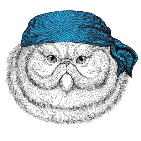 Portrait of fluffy persian cat Wild animal wearing bandana or kerchief or bandanna Image for Pirate Seaman Sailor Biker Motorcycle