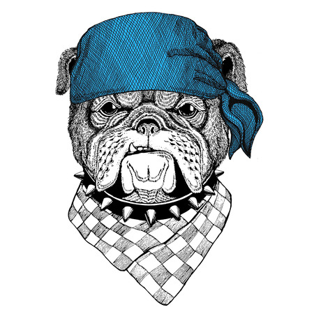 Bulldog Wild animal wearing bandana or kerchief or bandanna Image for Pirate Seaman Sailor Biker Motorcycle
