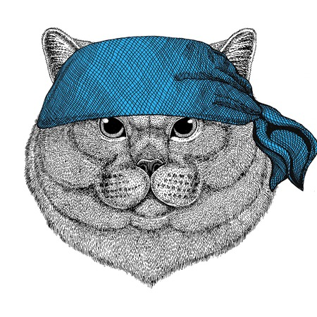 Brithish noble cat Male Wild animal wearing bandana or kerchief or bandanna Image for Pirate Seaman Sailor Biker Motorcycle Stock Photo