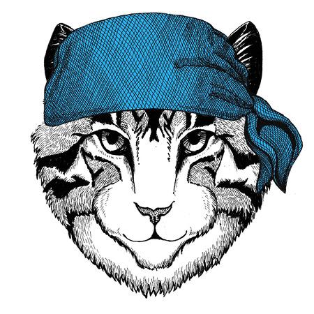 Image of domestic cat Wild animal wearing bandana or kerchief or bandanna Image for Pirate Seaman Sailor Biker Motorcycle