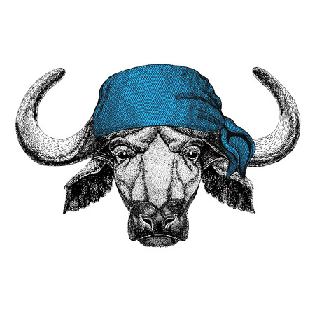 Buffalo, bull, ox Wild animal wearing bandana or kerchief or bandanna Image for Pirate Seaman Sailor Biker Motorcycle Stock Photo