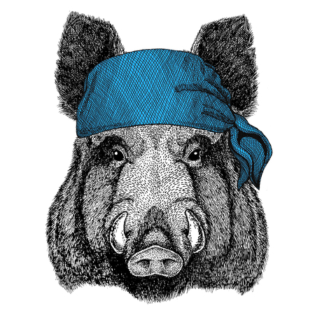 Aper, boar, hog, hog, wild boar Wild animal wearing bandana or kerchief or bandanna Image for Pirate Seaman Sailor Biker Motorcycle Stock Photo