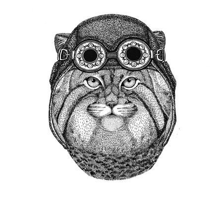 Wild cat Manul wearing aviator hat Motorcycle hat with glasses for biker Illustration for motorcycle or aviator t-shirt with wild animal
