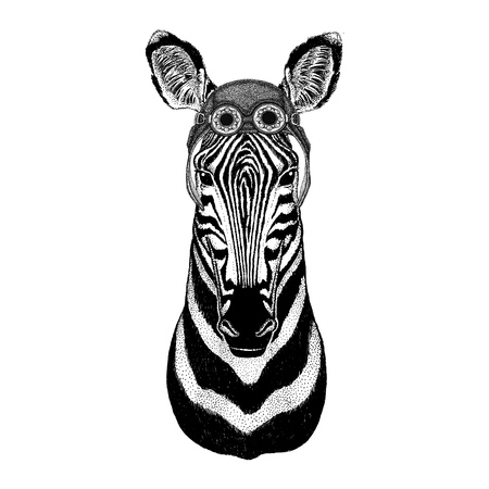 Zebra Horse wearing aviator hat Motorcycle hat with glasses for biker Illustration for motorcycle or aviator t-shirt with wild animal