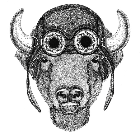 Buffalo, bison,ox, bull wearing aviator hat Motorcycle hat with glasses for biker Illustration for motorcycle or aviator t-shirt with wild animal
