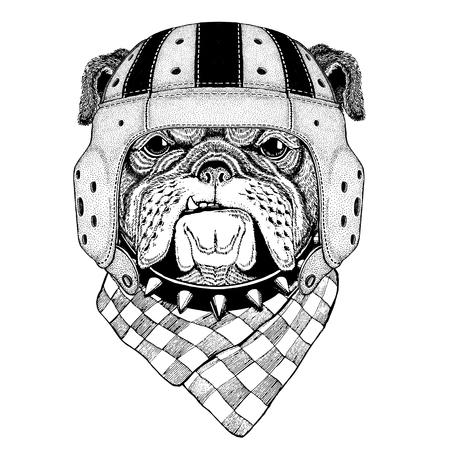 Bulldog Wild animal wearing rugby helmet Sport illustration Illusztráció