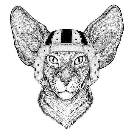 大きなオリエンタル猫耳野生動物着てラグビー ヘルメット スポーツ イラスト