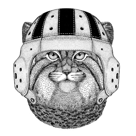 Wild cat Manul Wild animal wearing rugby helmet Sport illustration
