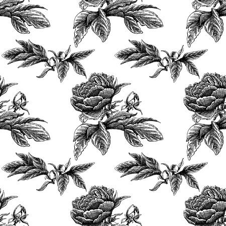 Pivoine fleur vectorielle continue rose motif avec croquis fleurs et feuilles. Image dessinée à la main Banque d'images - 86908692