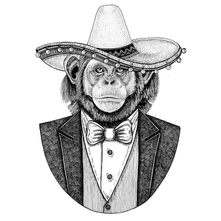 Chimpanzee Monkey Wild animal wearing Sombrero - traditional Mexican hat Hand drawn illustration for tattoo, emblem, badge, patch, t-shirt Stock fotó