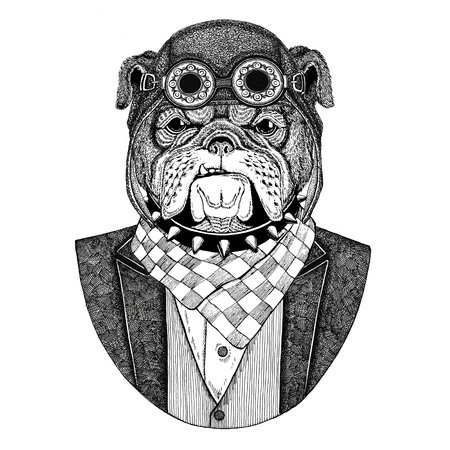Bulldog Dog Animal wearing aviator helmet and jacket with bow tie Flying club Hand drawn illustration for tattoo, t-shirt, emblem, logo, badge, patch Stok Fotoğraf