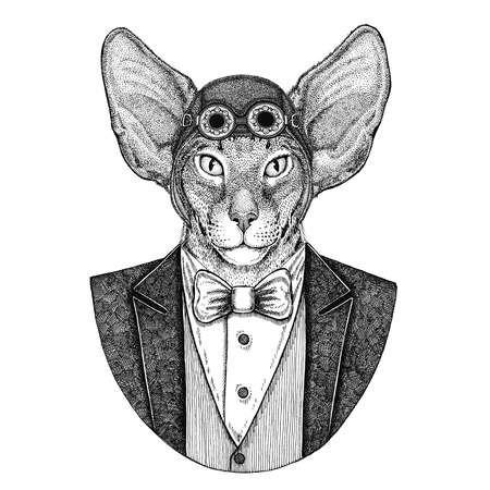 Oriental cat with big ears Animal wearing aviator helmet and jacket with bow tie Flying club Hand drawn illustration for tattoo, t-shirt, emblem, logo, badge, patch Stok Fotoğraf