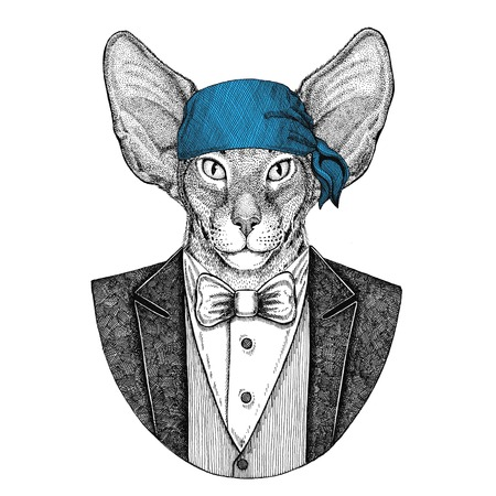 Oriental cat with big ears Wild biker, pirate animal wearing bandana Hand drawn image for tattoo, emblem, badge, logo, patch, t-shirt