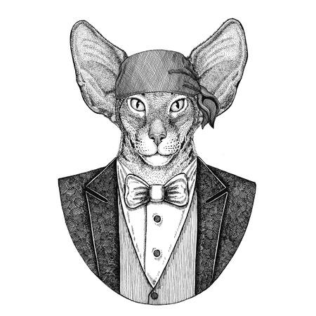 Oriental cat with big ears Wild biker, pirate animal wearing bandana Hand drawn image for tattoo, emblem, badge, logo, patch, t-shirt