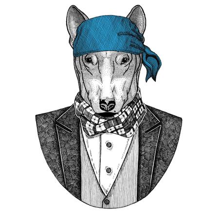 Bull terrier. Dog. Elegant pirate animal wearing bandana Hand drawn image for tattoo, emblem, badge, logo, patch