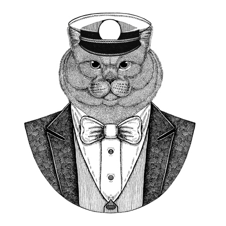 Brithish noble cat Male Animal wearing jacket with bow-tie and capitans peaked cap Elegant sailor, navy, capitan, pirate. Image for tattoo, t-shirt, emblem, badge, logo, patches Stock Photo