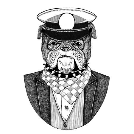 Bulldog Animal vistiendo chaqueta con corbata de moño y capitanes cappepeado Elegante marinero, armada, capitan, pirata. Imagen de tatuaje, camiseta, emblema, placa, logotipo, parches Foto de archivo - 92843084