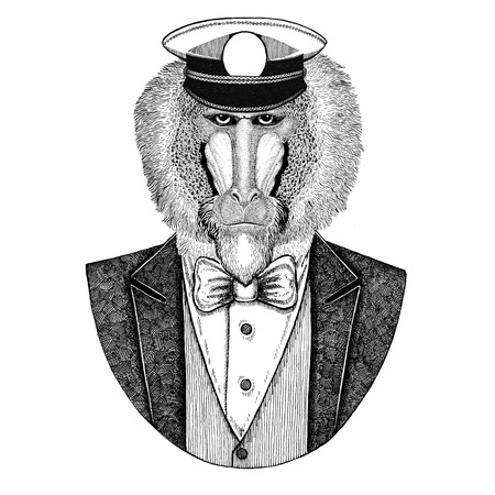 Monkey, baboon, dog-ape, ape Animal wearing jacket with bow-tie and capitans peaked cap Elegant sailor, navy, capitan, pirate. Image for tattoo, t-shirt, emblem, badge, logo, patches
