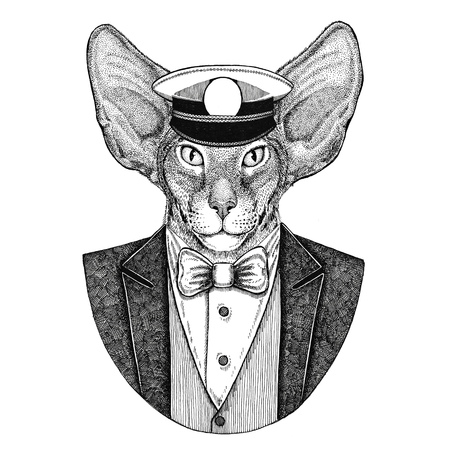 Oriental cat with big ears Animal wearing jacket with bow-tie and capitans peaked cap Elegant sailor, navy, capitan, pirate. Image for tattoo, t-shirt, emblem, badge, logo, patches Stock Photo