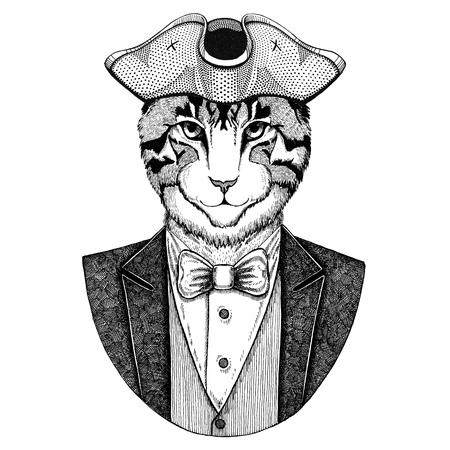 Bild der Hauskatze Tier, das gespanntes Hut, tricorn trägt Hand gezeichnetes Bild für Tätowierung, T-Shirt, Emblem, Ausweis, Logo, Flecken Standard-Bild - 92813503
