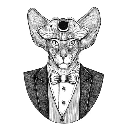 Oriental cat with big ears Animal wearing cocked hat, tricorn Hand drawn image for tattoo, t-shirt, emblem, badge, logo, patches