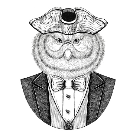 Portrait of fluffy persian cat Animal wearing cocked hat, tricorn Hand drawn image for tattoo, t-shirt, emblem, badge, logo, patches Stock Photo
