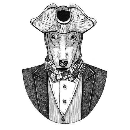 Bullterrier, dog, bull terrier for t-shirt design Animal wearing cocked hat, tricorn Hand drawn image for tattoo, t-shirt, emblem, badge, logo, patches