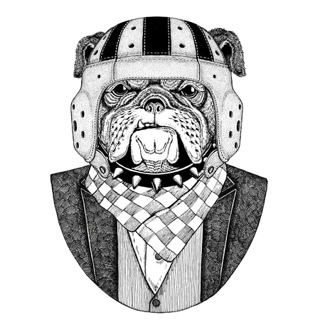 Bulldog, dog Elegant rugby player. Old school vintage rugby helmet. American football. Vintage style illustration for tattoo, emblem, badge, logo, patch, t-shirt