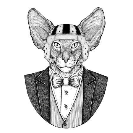 Oriental cat with big ears Elegant rugby player. Old school vintage rugby helmet. American football. Vintage style illustration for tattoo, emblem, badge, logo, patch, t-shirt