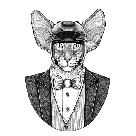 Oriental cat with big ears Animal wearing jacket with bow-tie and hockey helmet or aviatior helmet. Elegant hockey player. Image for tattoo, t-shirt, emblem, badge, logo, patch Stock fotó